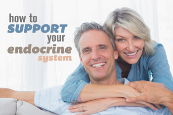 How to support your Endocrine System